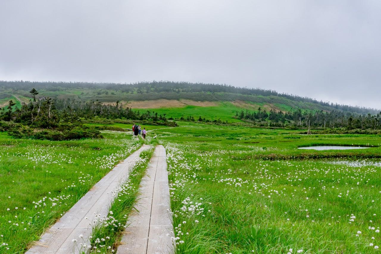 八幡平の湿原