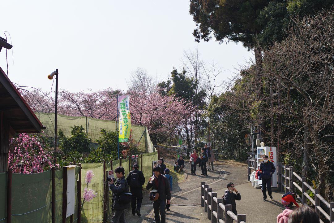 松田山のハーブ園