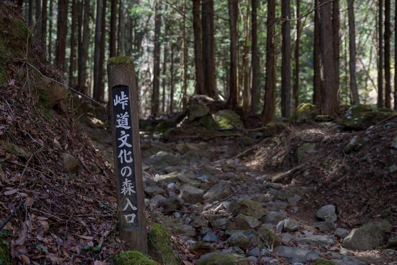 190324倉岳山_026