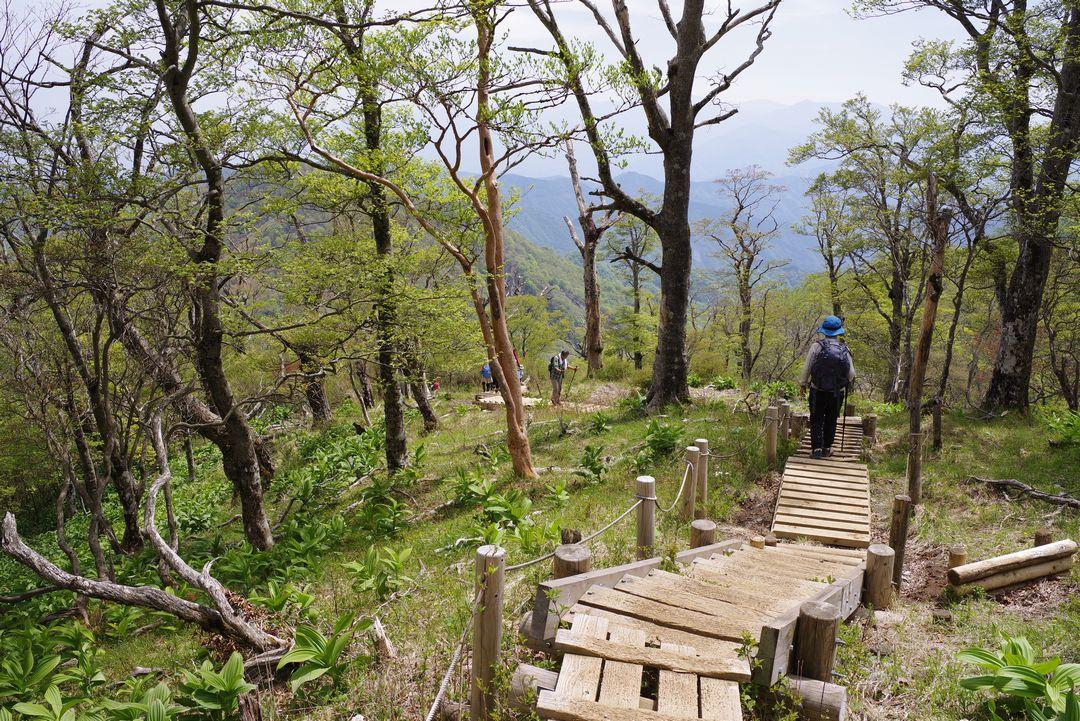 檜洞丸 山頂付近の登山道