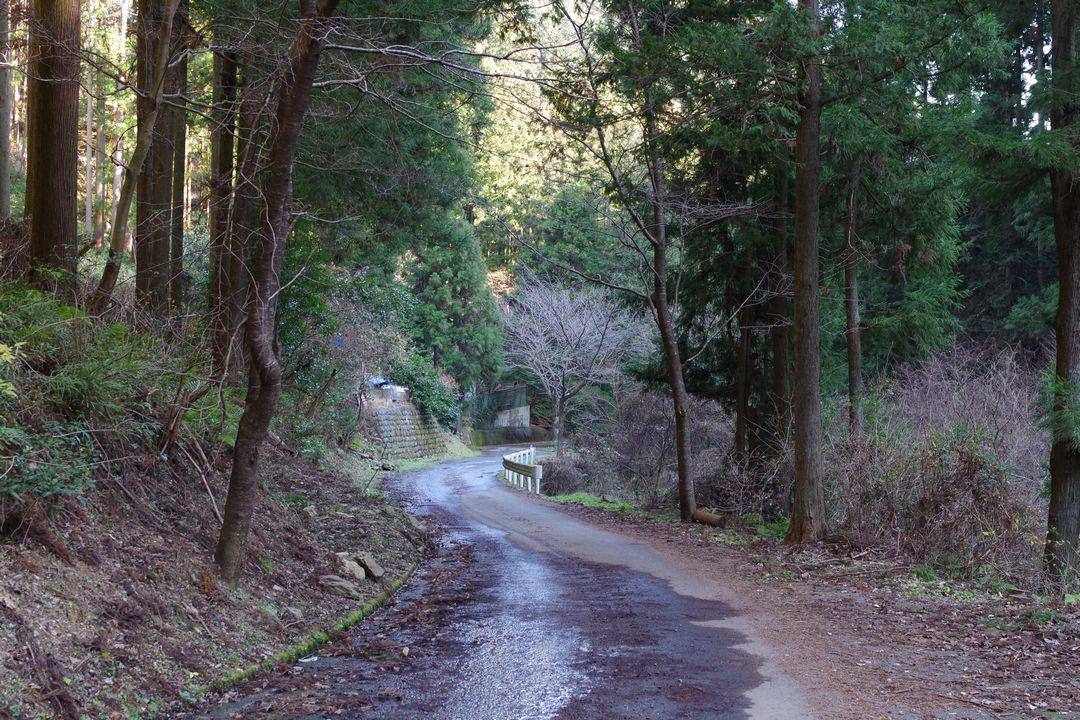 黒山三滝方向への林道