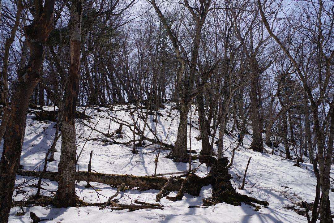 鷹ノ巣山 雪の稲村岩尾根
