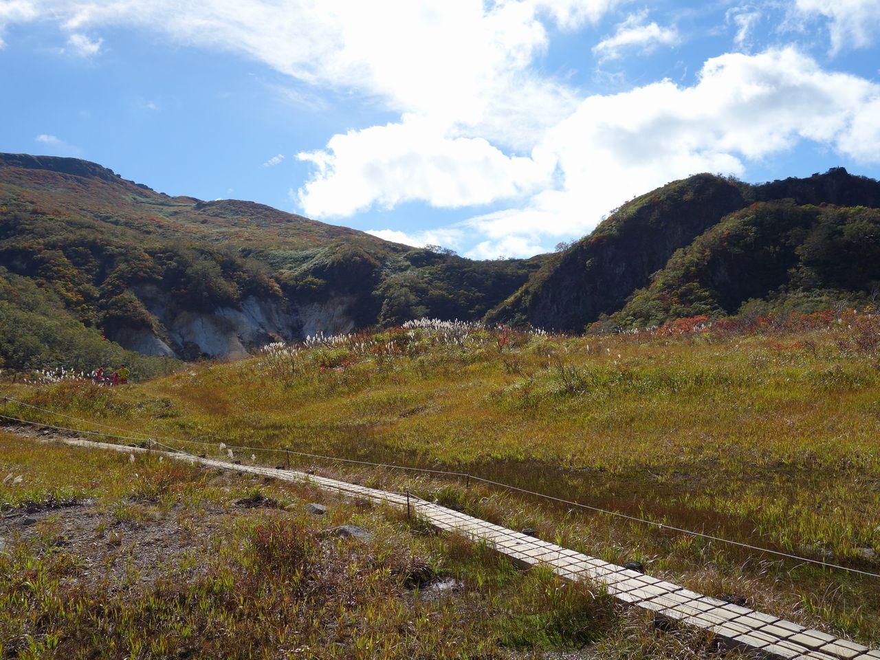 栗駒山須川温泉コースの湿原