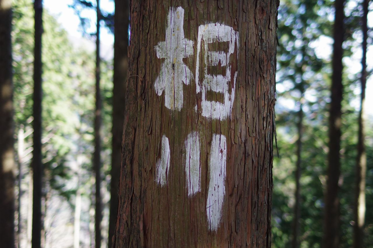171230蛭ヶ岳_074