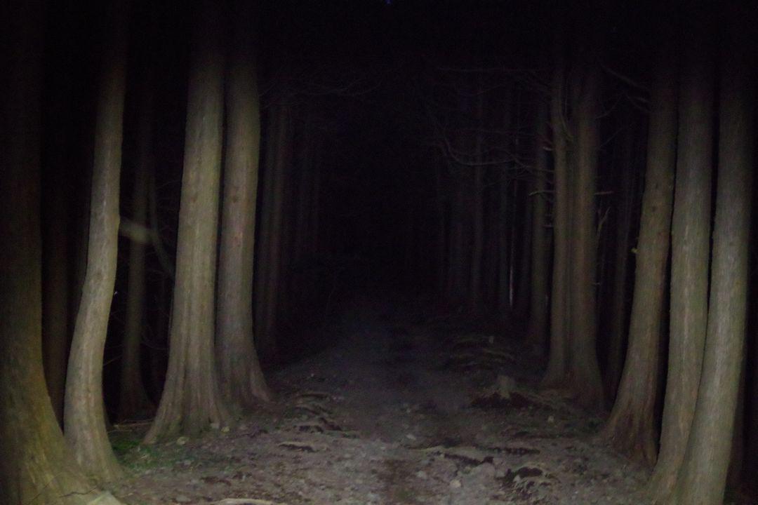 暗闇の大倉尾根