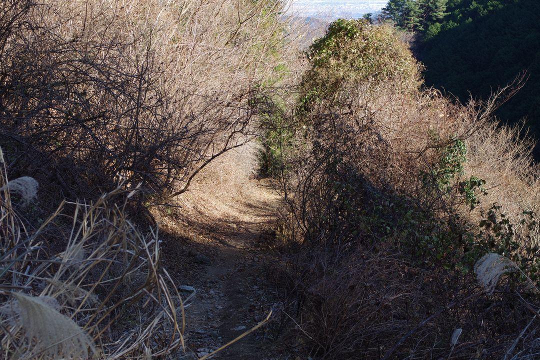 ススキに囲まれた登山道
