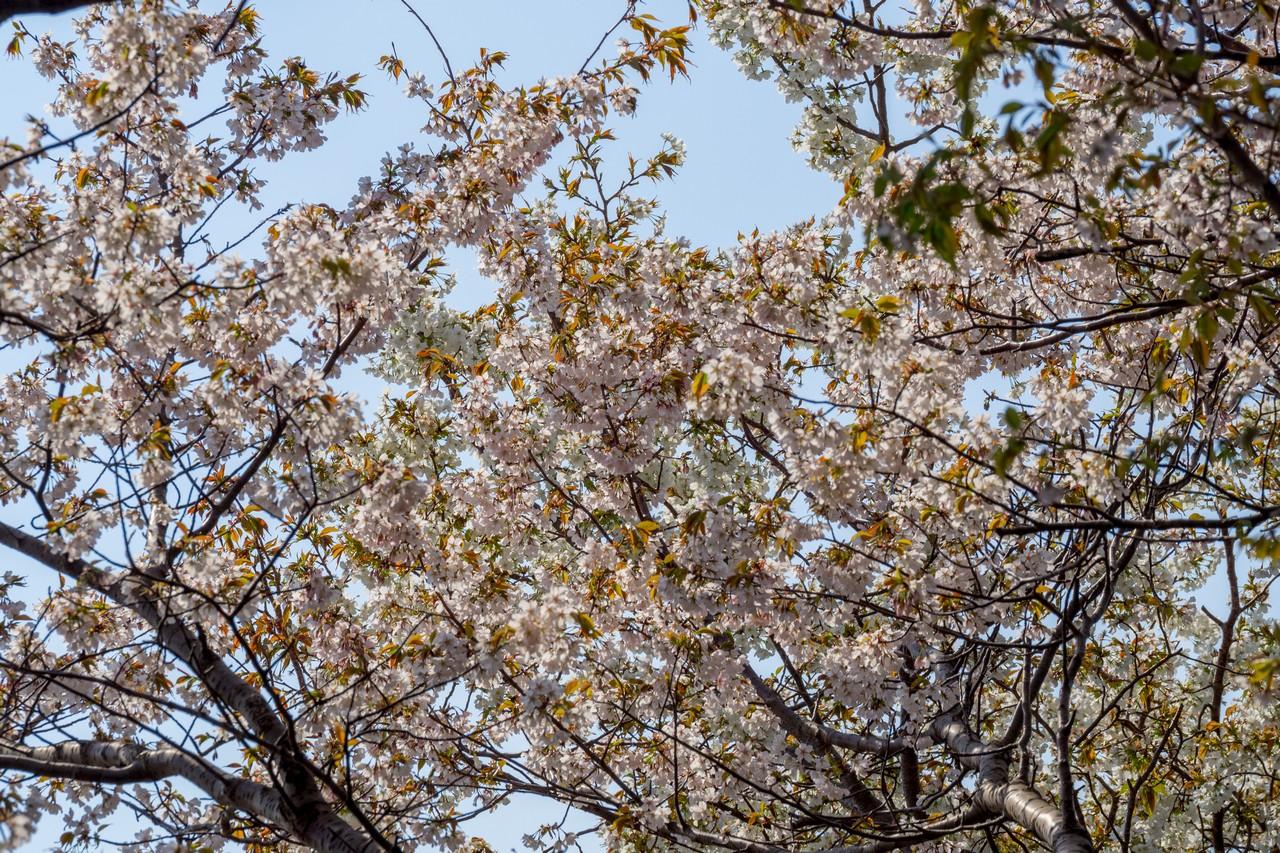 200405高取山_033