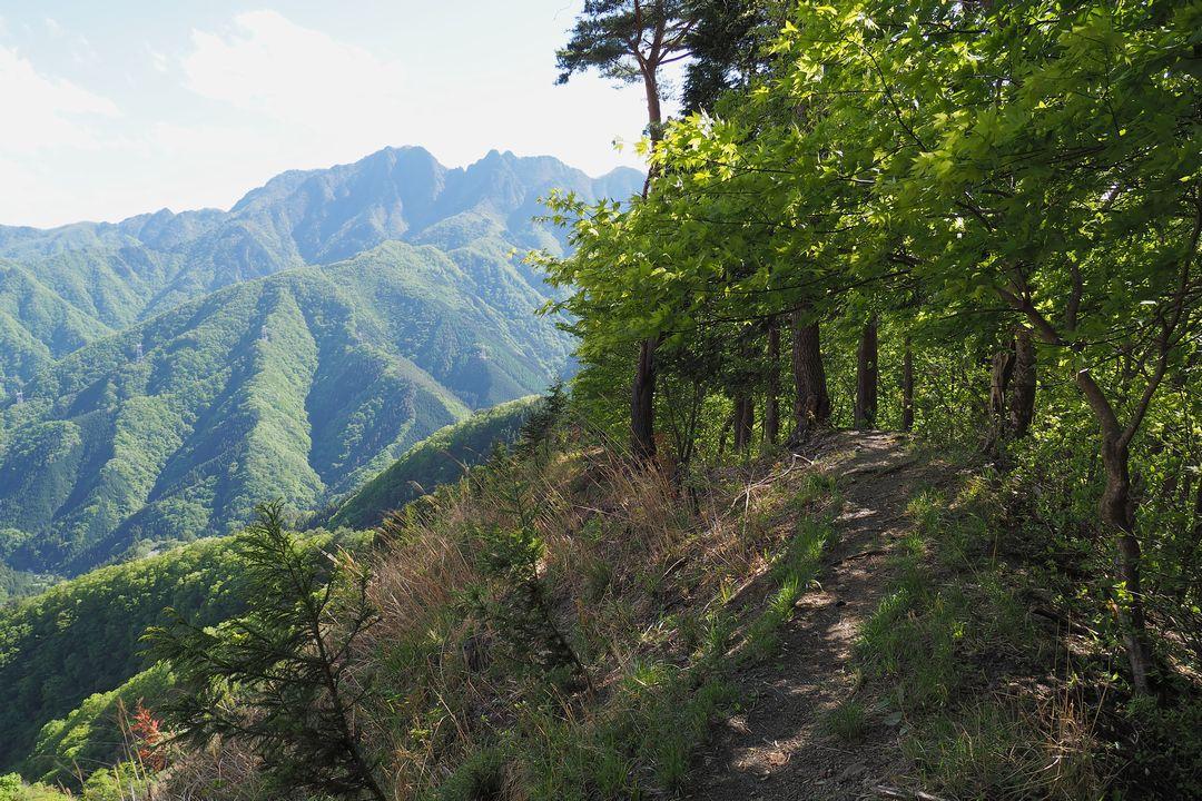 二子山 魚尾道峠へ向かう登山道