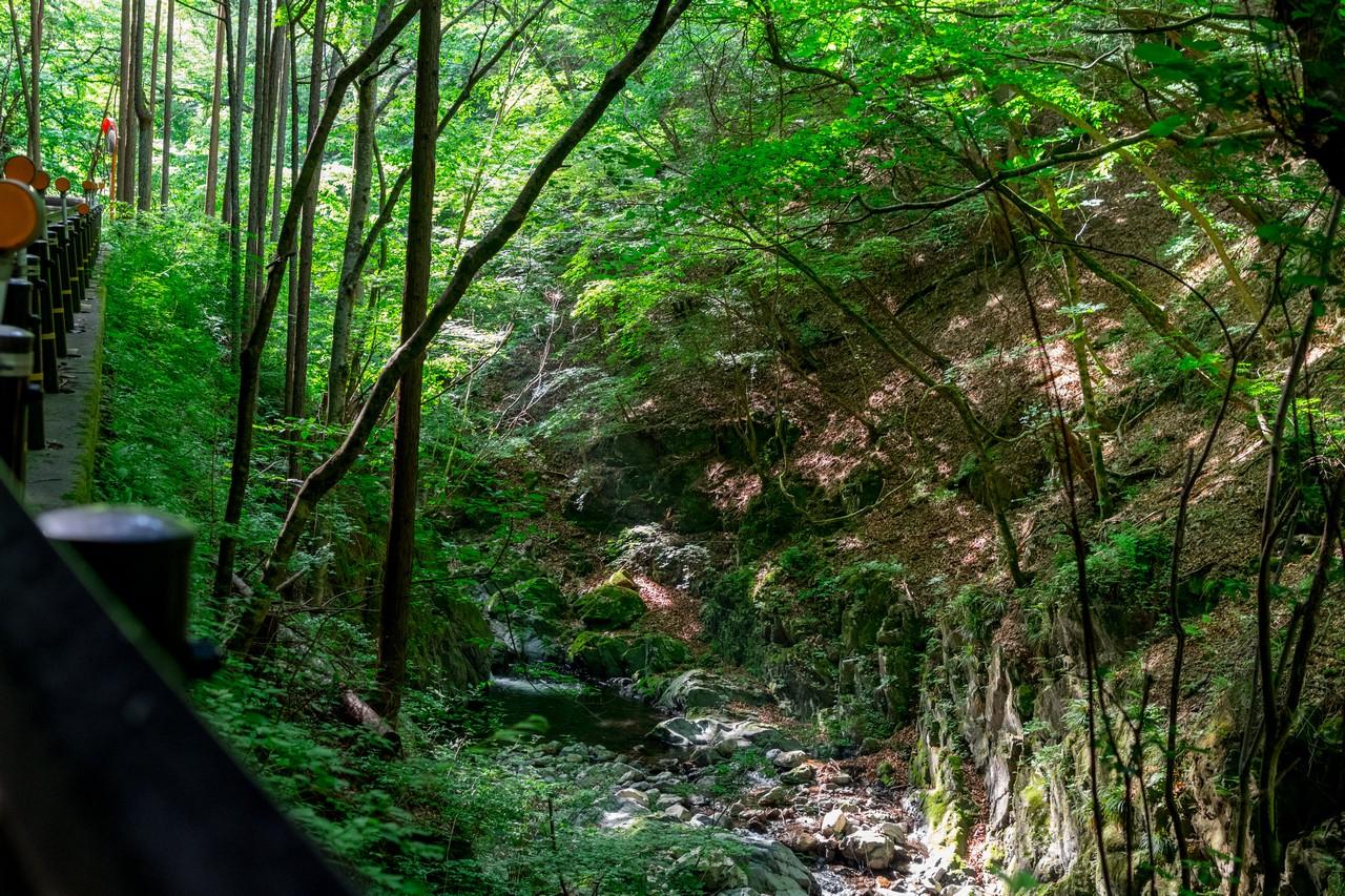 川乗谷を流れる沢