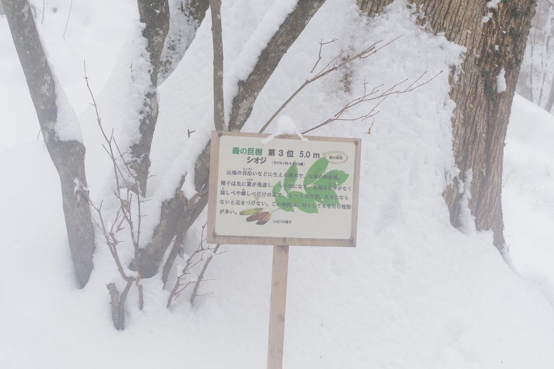 180203三頭山_066