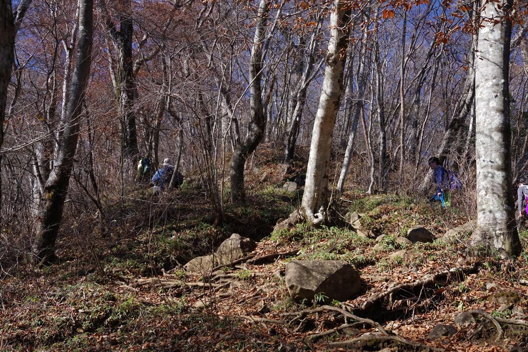 三頭山 東峰直下の登山道