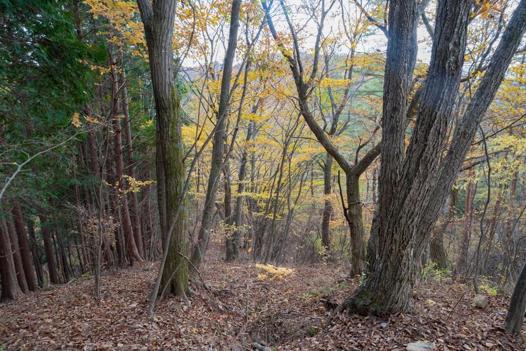 笹尾根の紅葉
