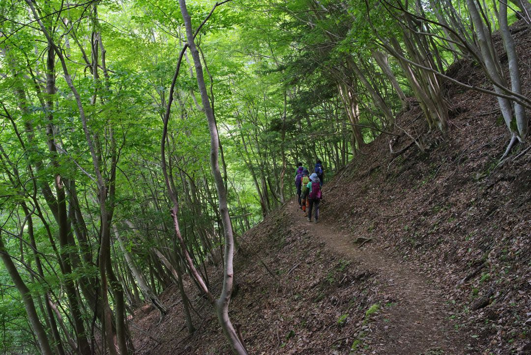 檜洞丸 ゴーラ沢出合手前の登山道
