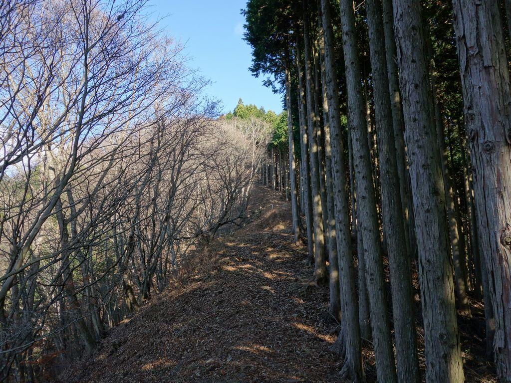 小河内峠から御前山への登山道