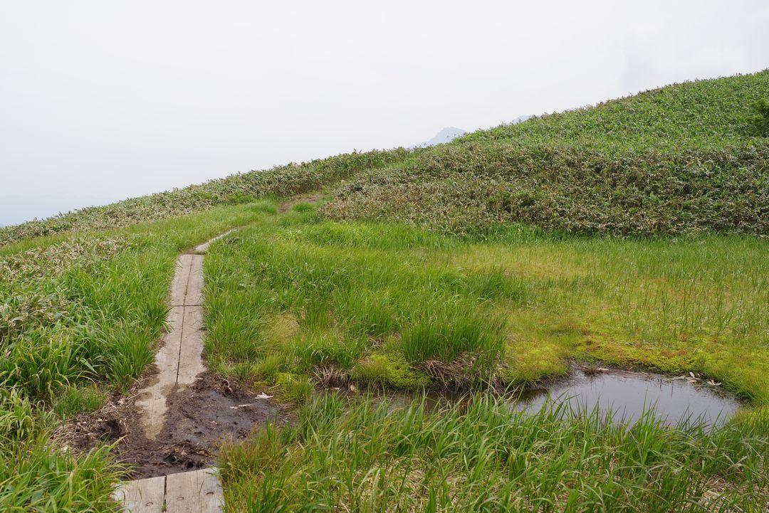 七ツ小屋山の池塘