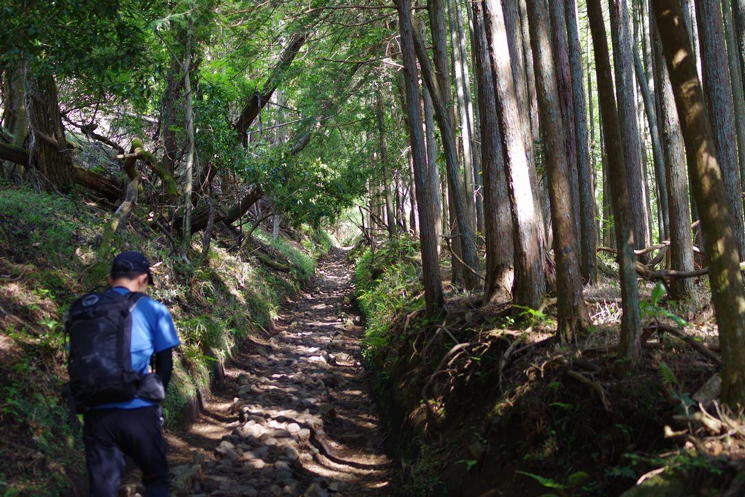 大倉尾根の登り始め