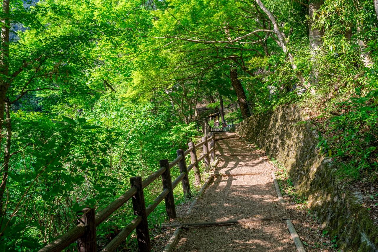 払沢の滝へと続く歩道