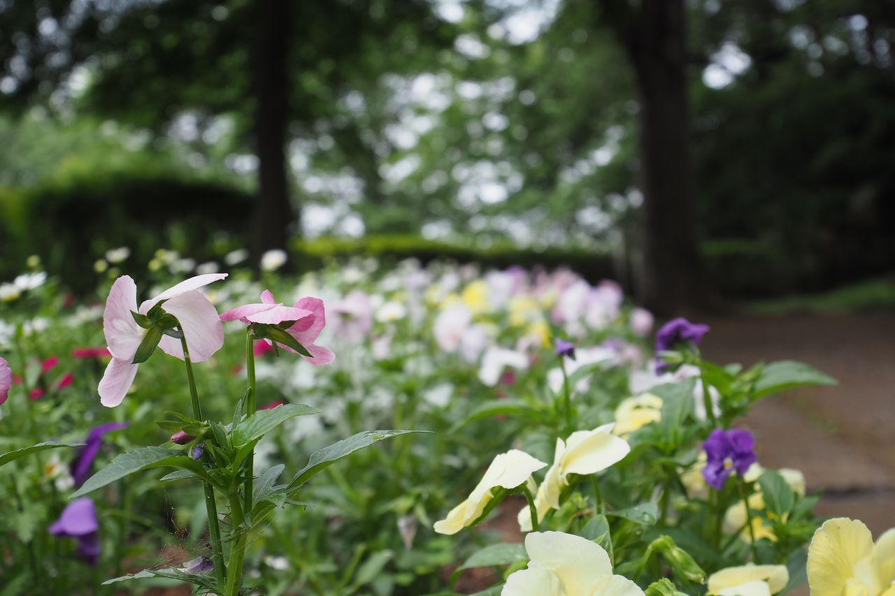中抜公園の花壇
