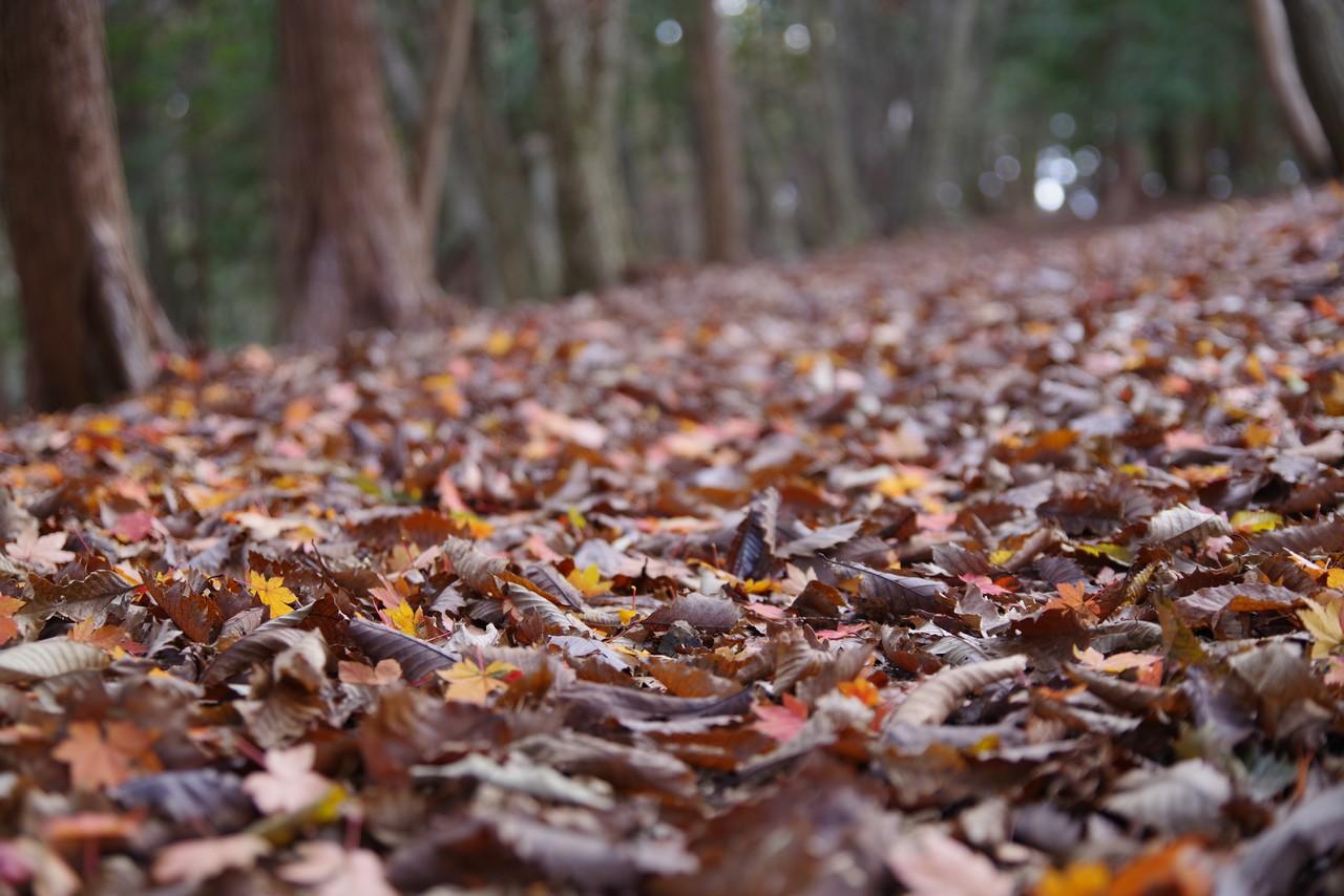 枯れ葉が積もった登山道