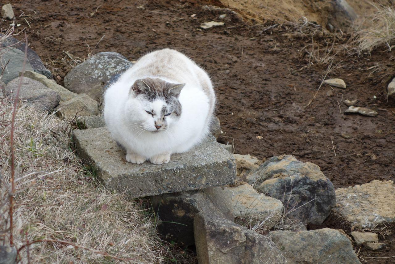 塔ノ岳山頂の猫