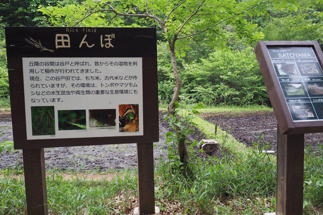 長池公園の田んぼ