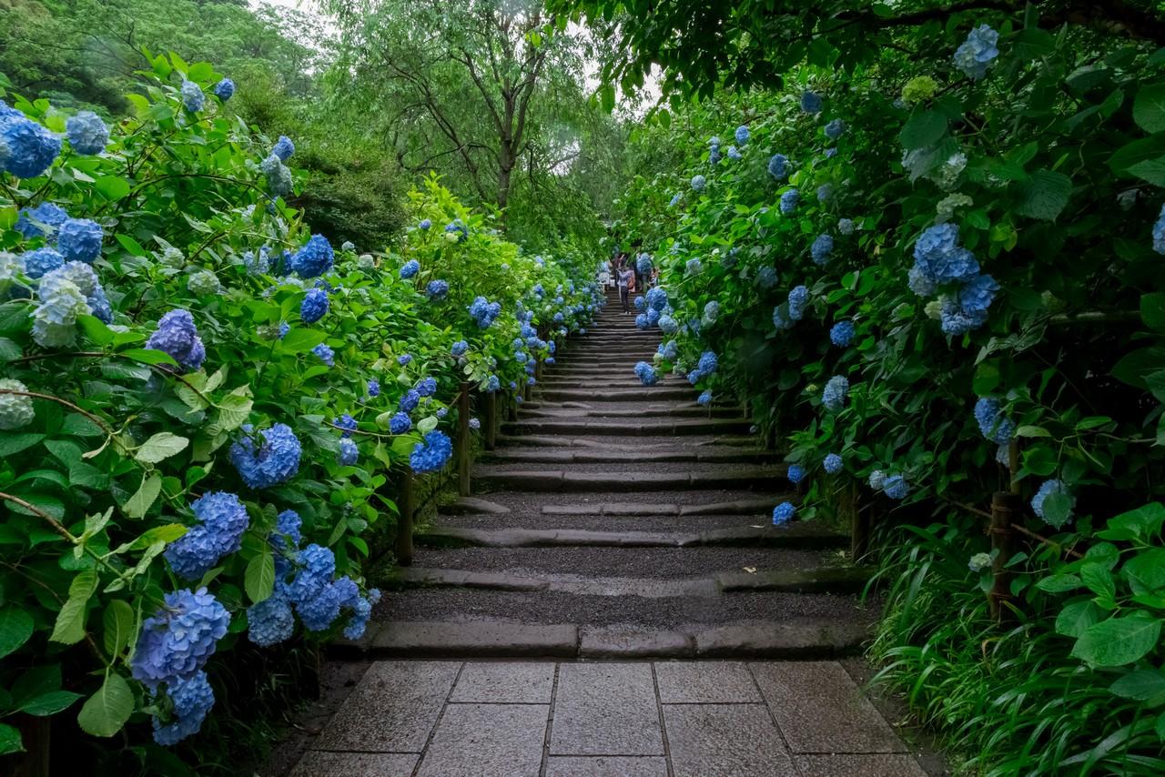 明月院 青の階段