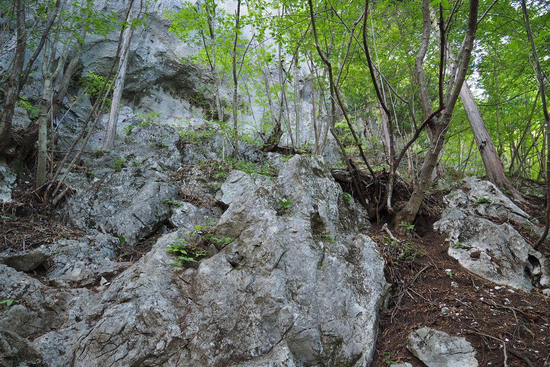 二子山 西岳一般コースの様子