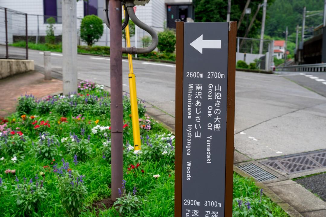 190630南沢あじさい山_014