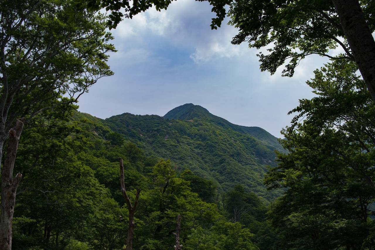 大源太山の山頂部