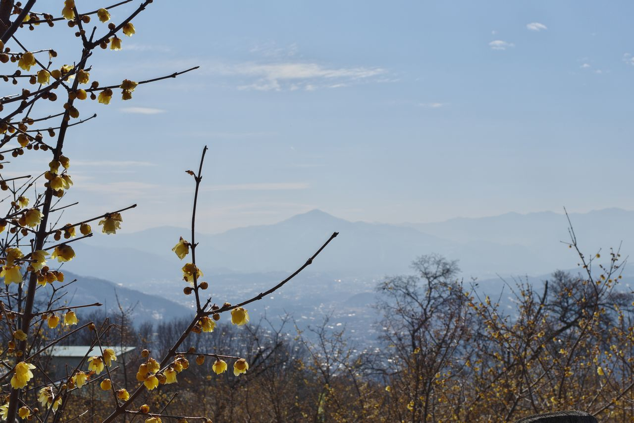 宝登山から見た武甲山