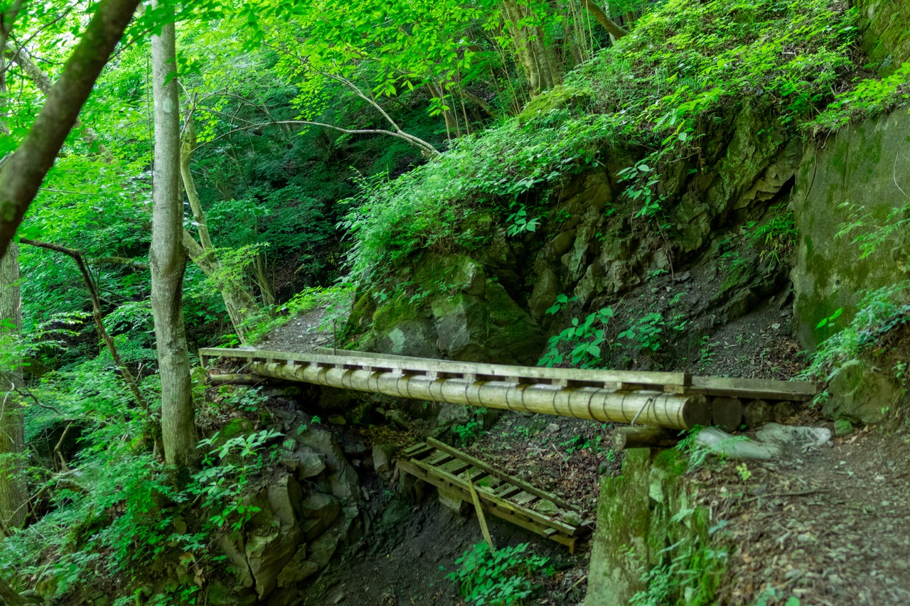 川苔山 川乗橋コースの木橋