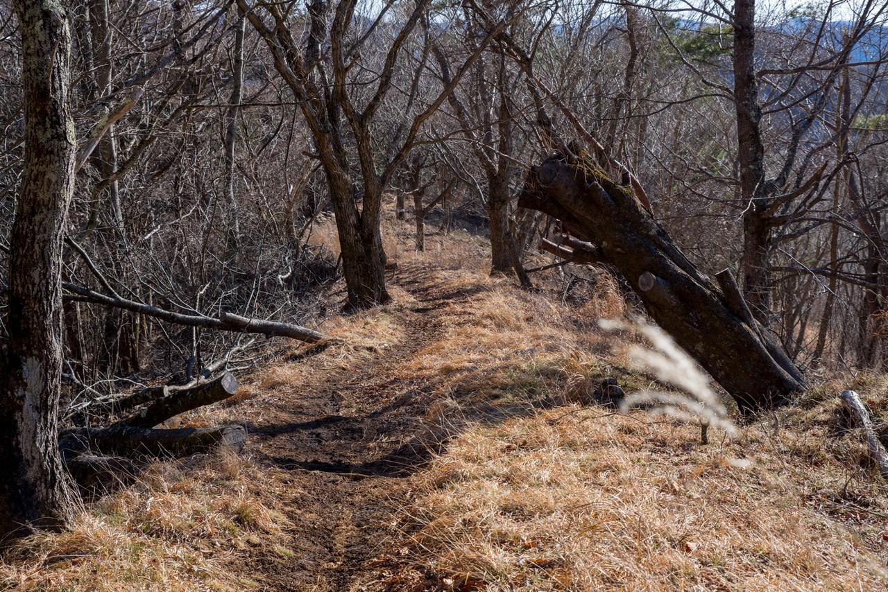 200103杓子山_082