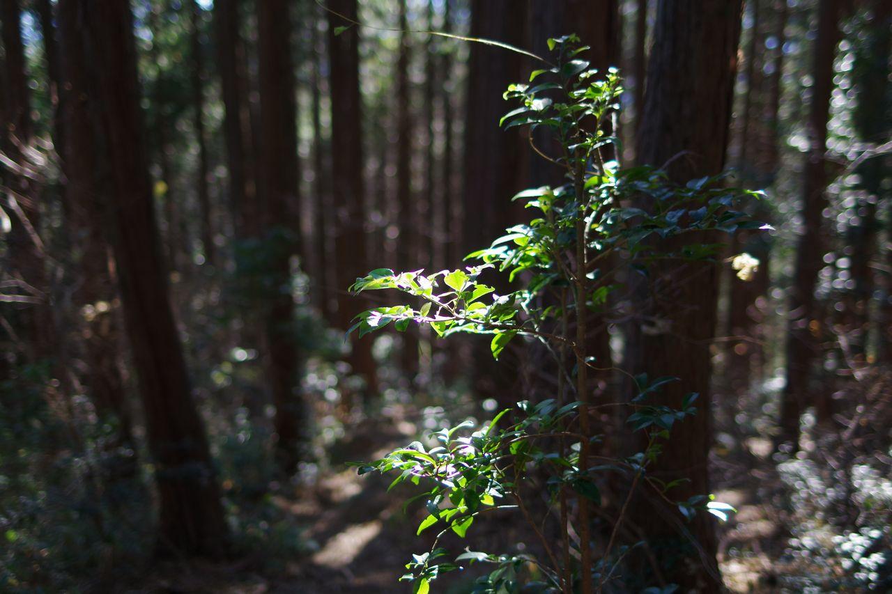 木漏れ日が差し込む関八州見晴台からの下山路