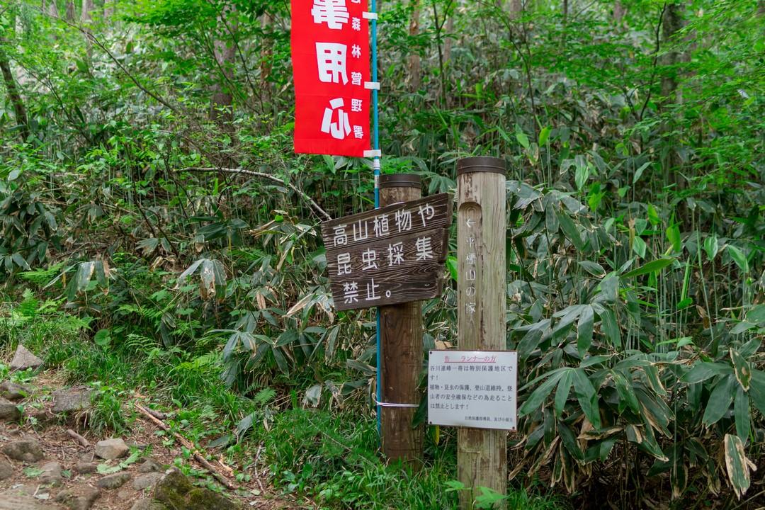 170624仙ノ倉山_094