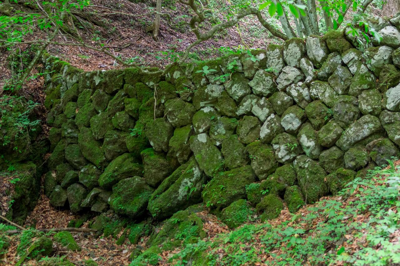 川苔山のワサビ田跡