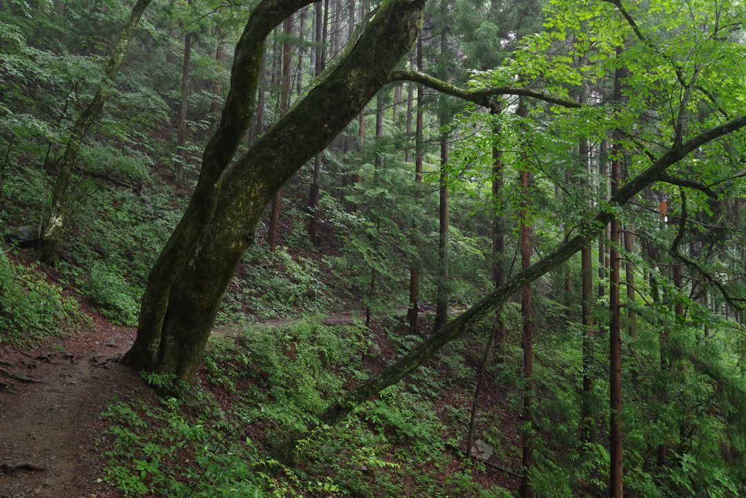 御岳山からロックガーデンへ至る登山道