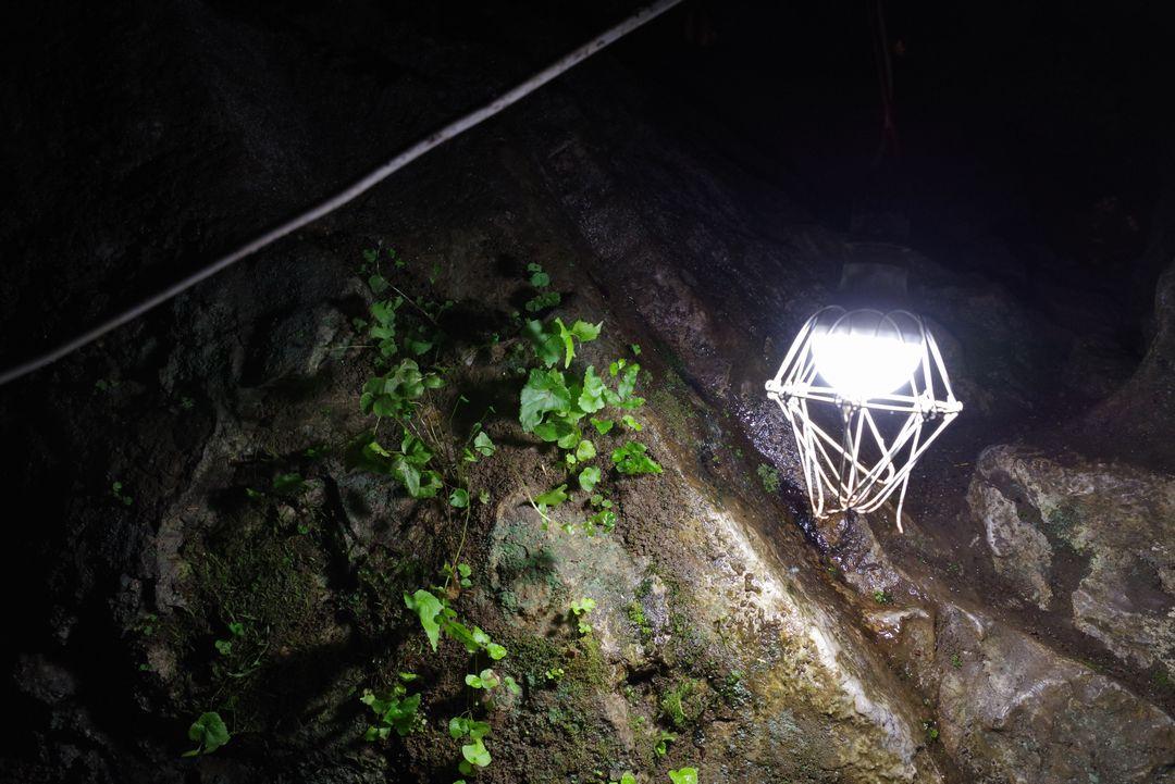 大岳鍾乳洞の内部に生えた植物