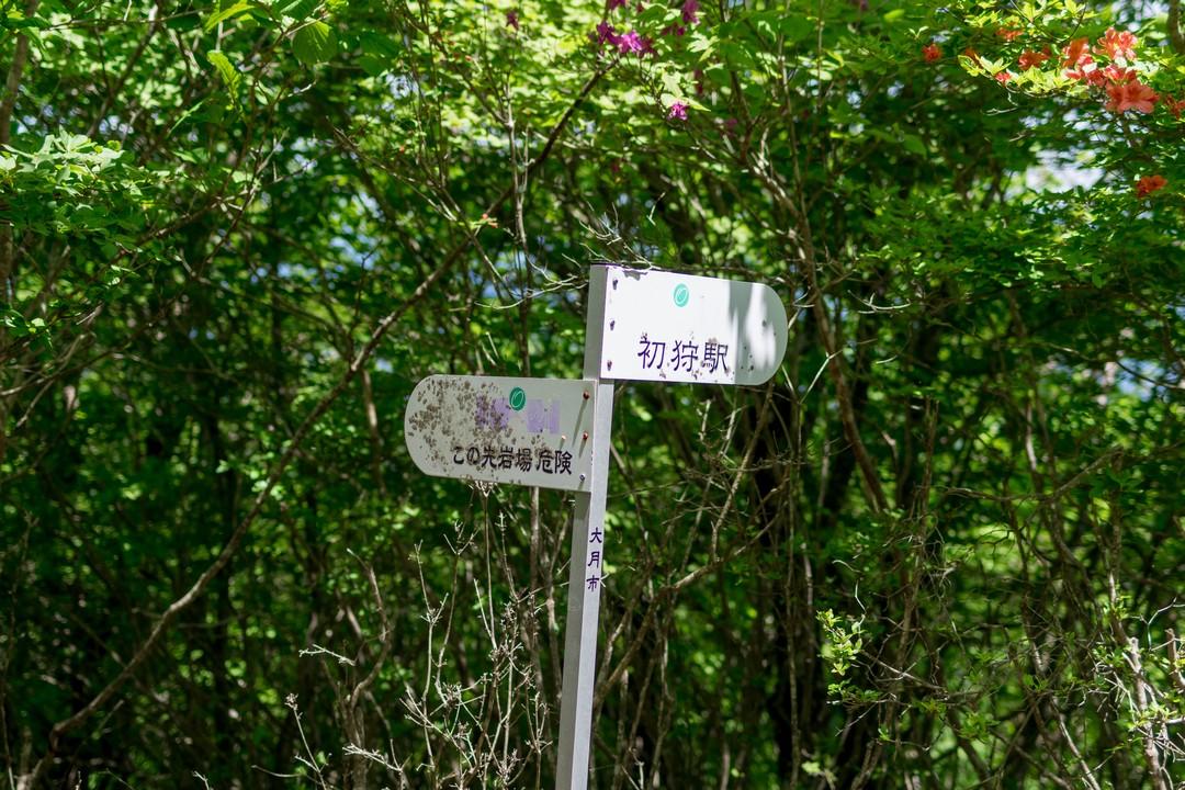 170603滝子山_059_1