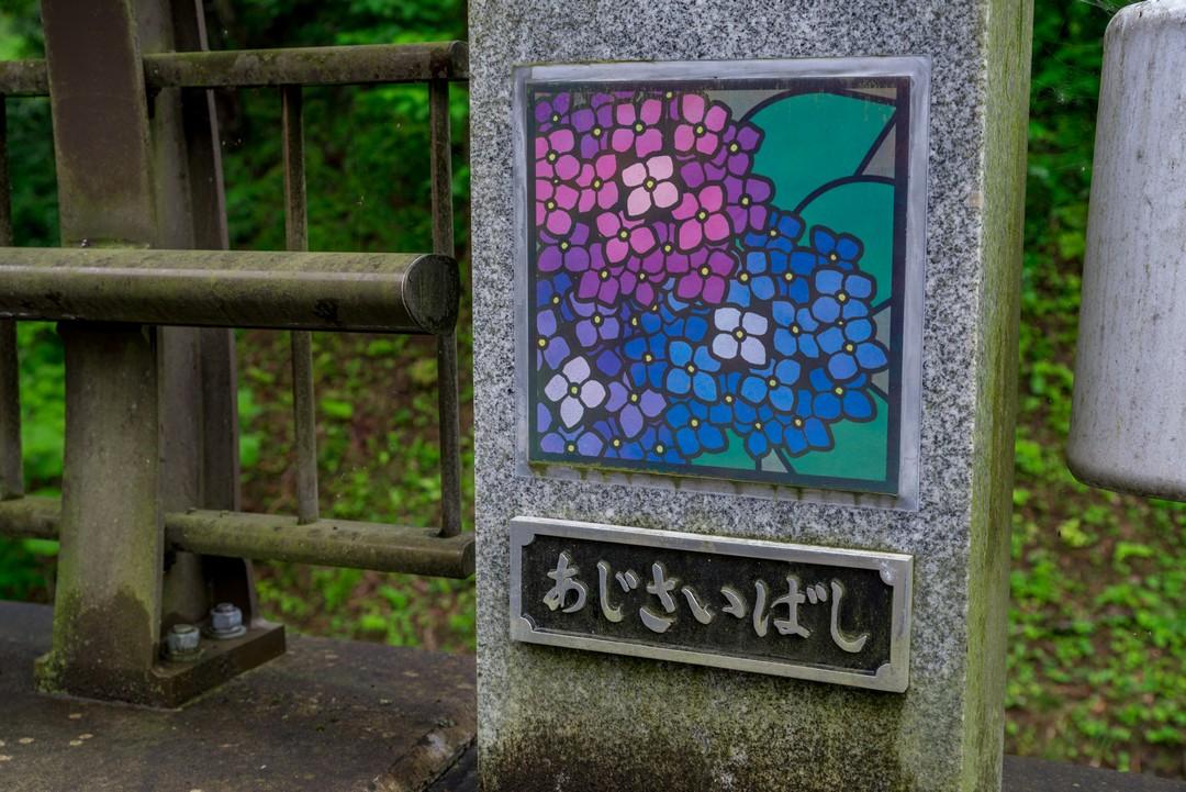 190630南沢あじさい山_023