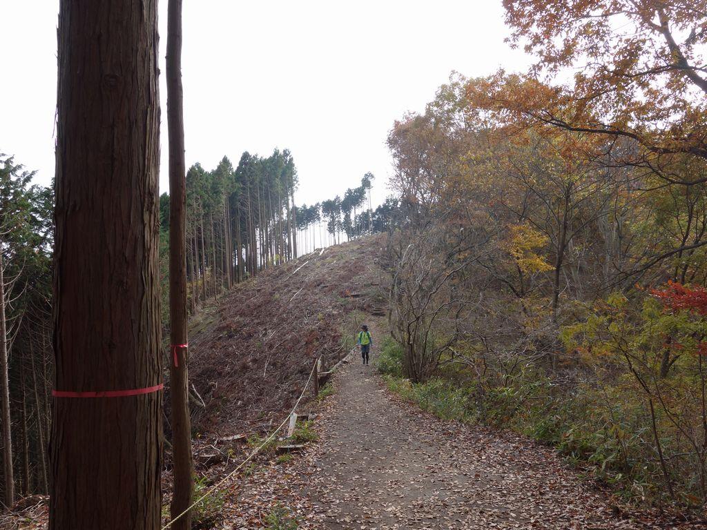 景信山から明王峠へと向かう縦走路