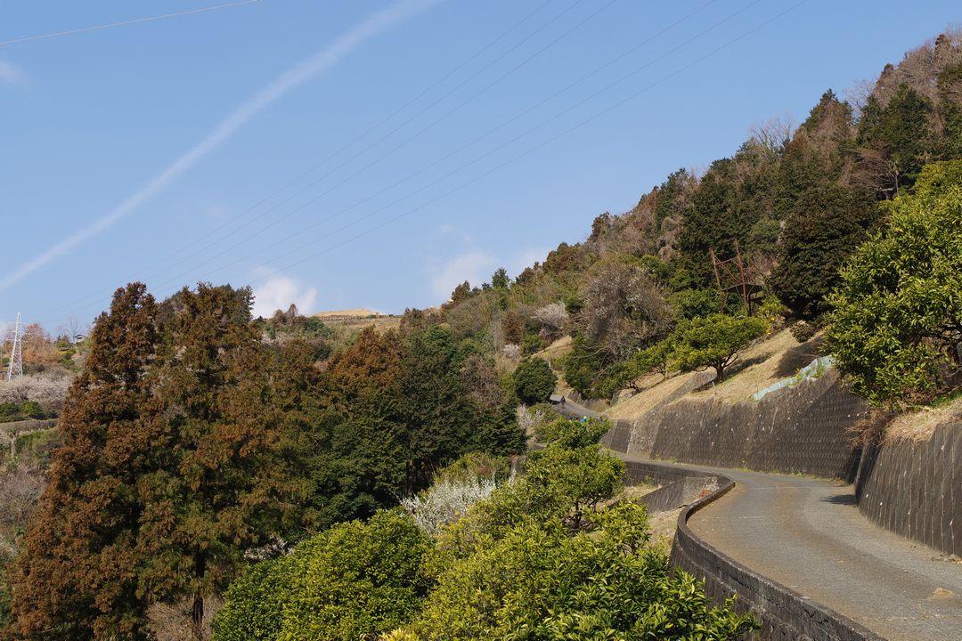 高松山のみかん畑