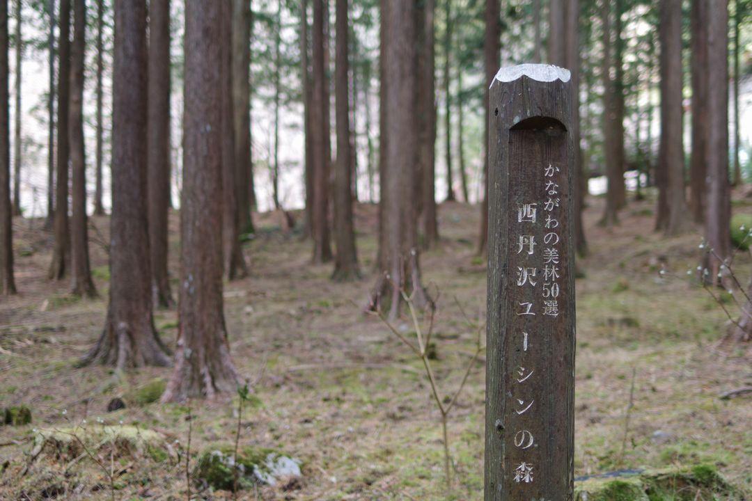 171229蛭ヶ岳_045