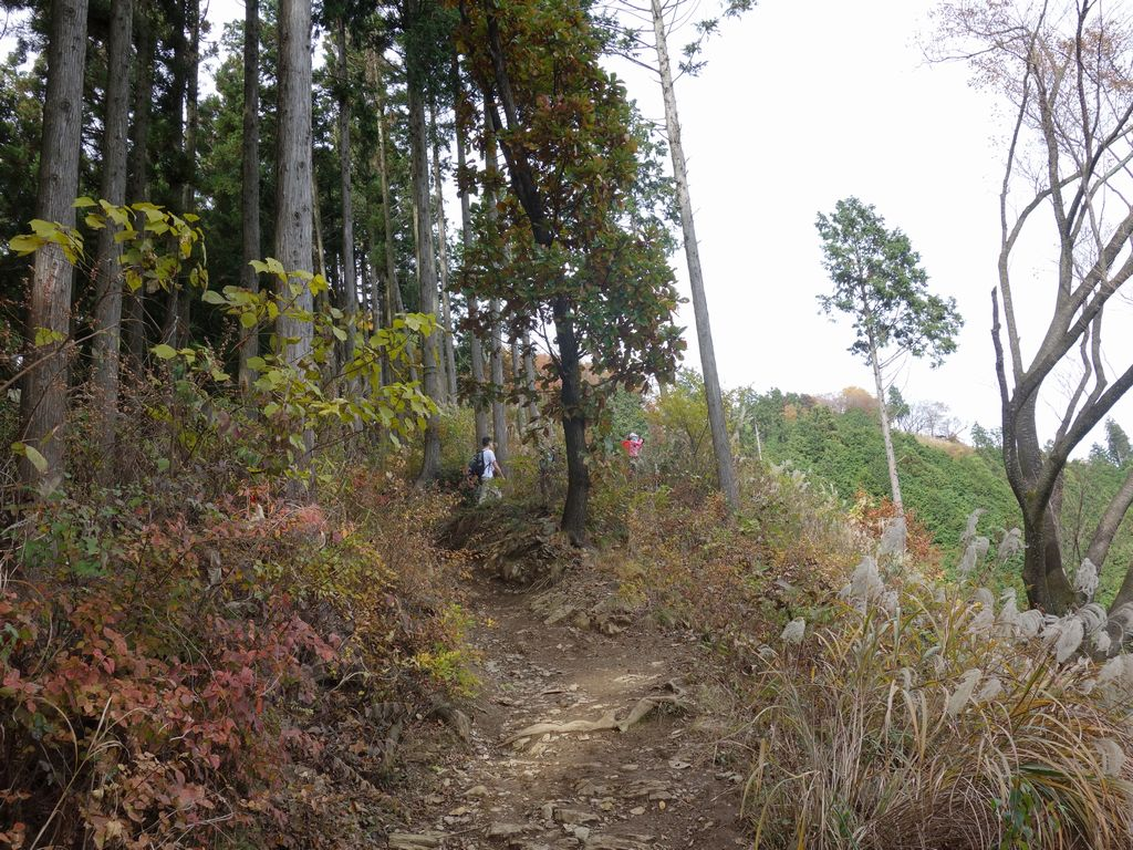 小仏峠から景信山へ向かう登山道