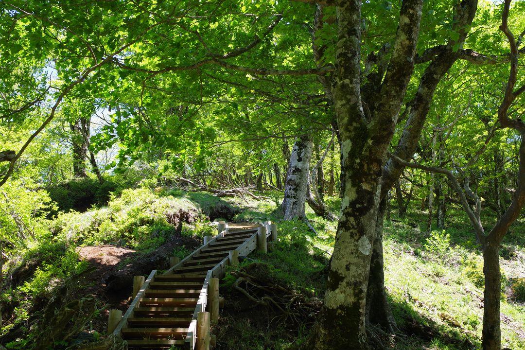 丹沢主稜縦走路の光景