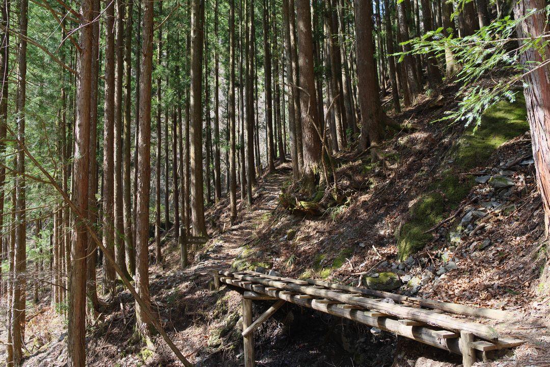 鷹ノ巣山 稲村岩尾根ルートの沿道風景