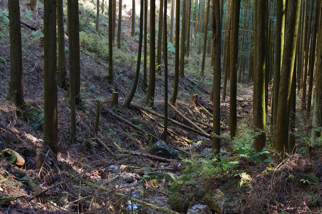 黒山三滝方向への下山路