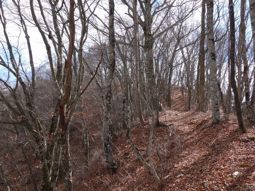 三頭山 鶴峠コースの様子