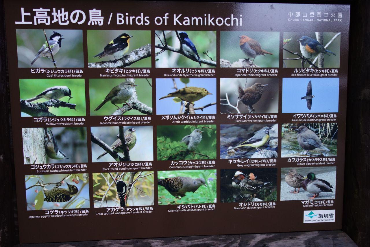 上高地の鳥の看板