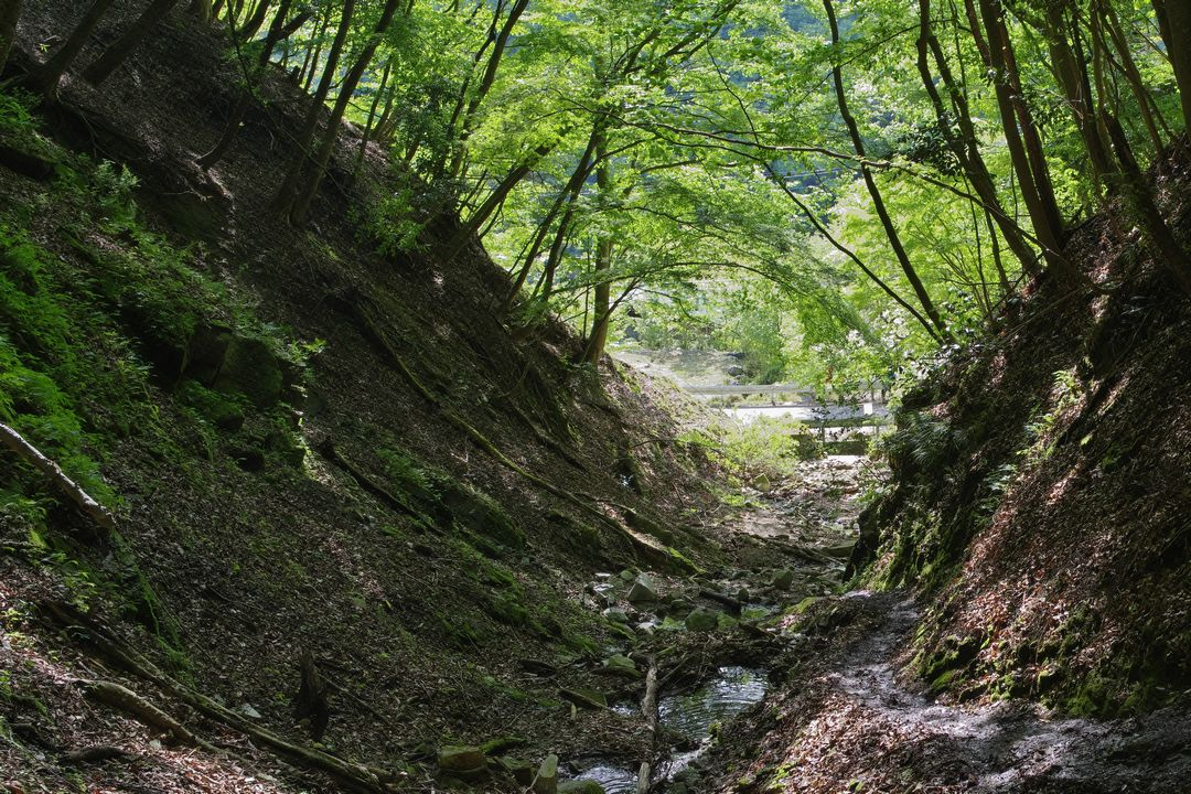 檜洞丸 つつじ新道入り口付近の登山道