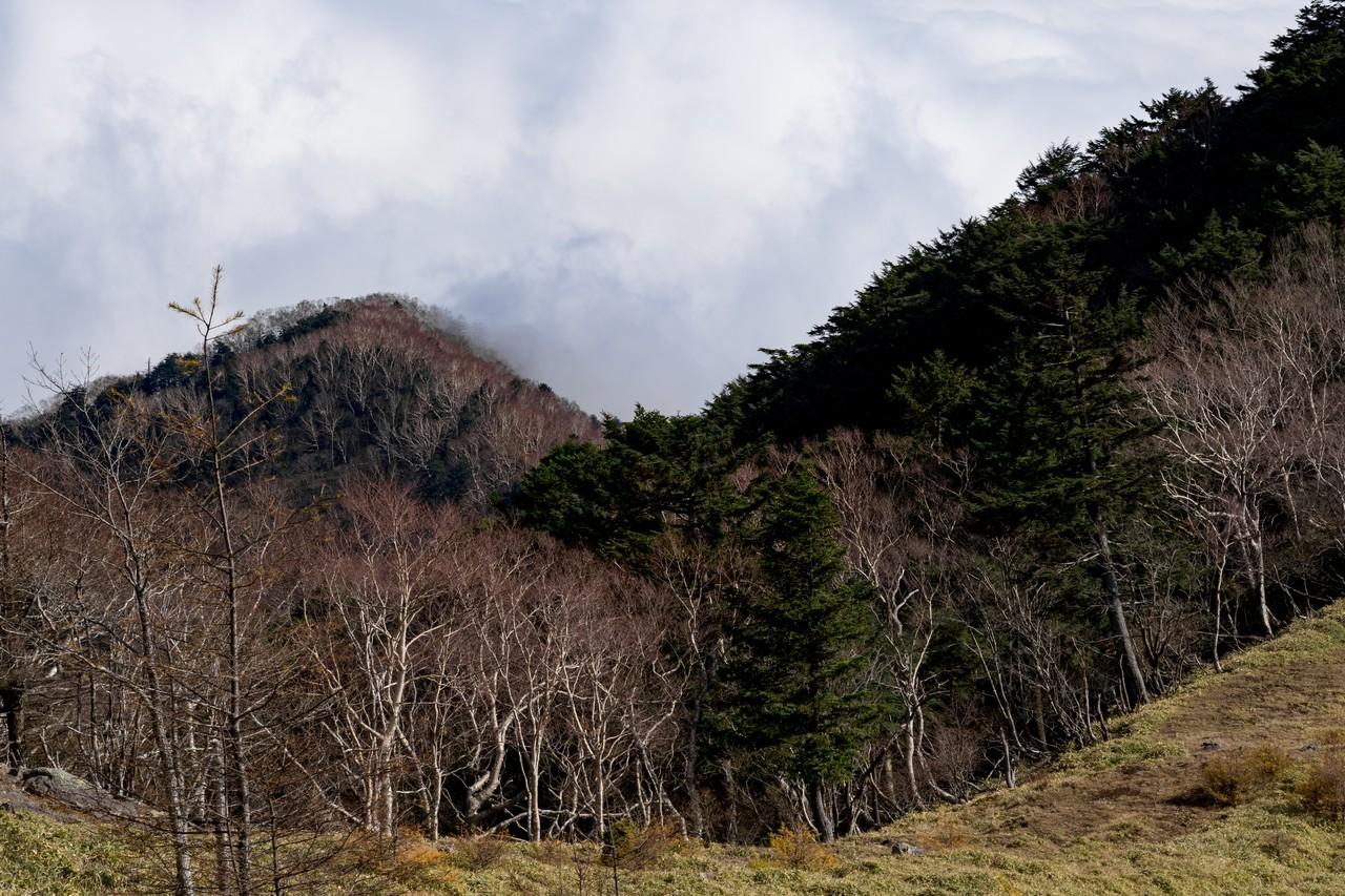 191109大菩薩嶺_058